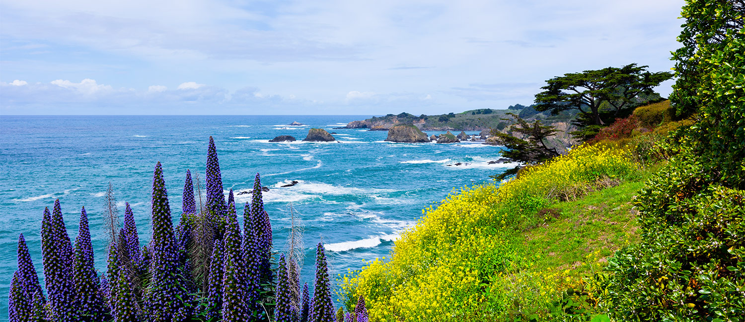 Explore The Splendor Of Mendocino
